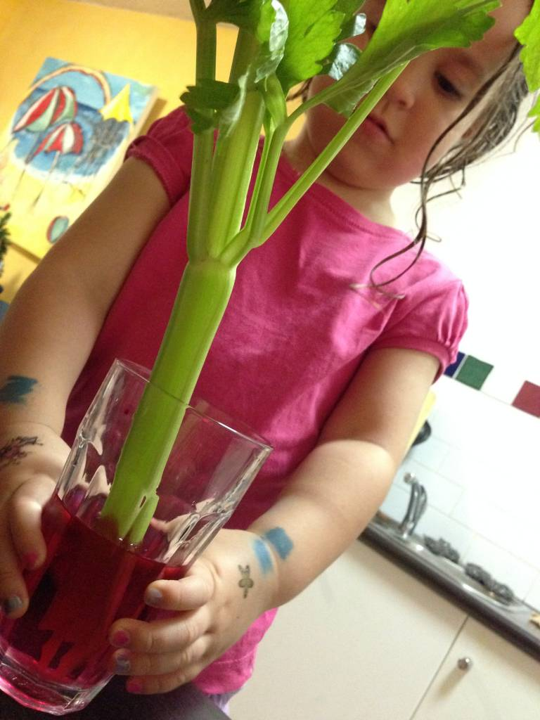 Diverting a Minor Upset: A Celery Science Experiment - Katesurfs.com